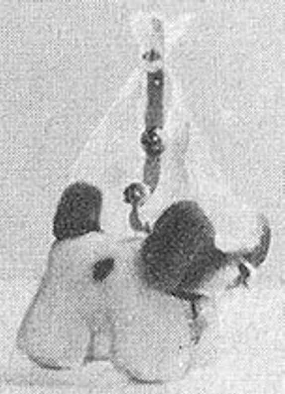 hermann 167/1 kleinstkind-spielzeug hund dralonpluesch